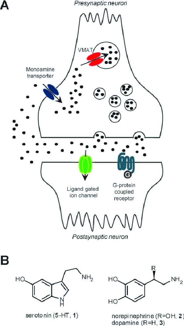 A. Schematic representation of a simplified monoaminergic