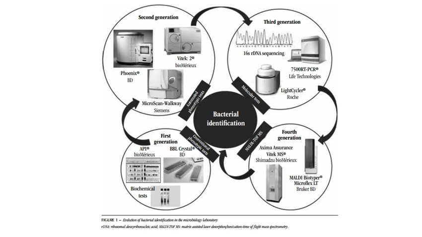 Evolution of bacterial identification in the clinical