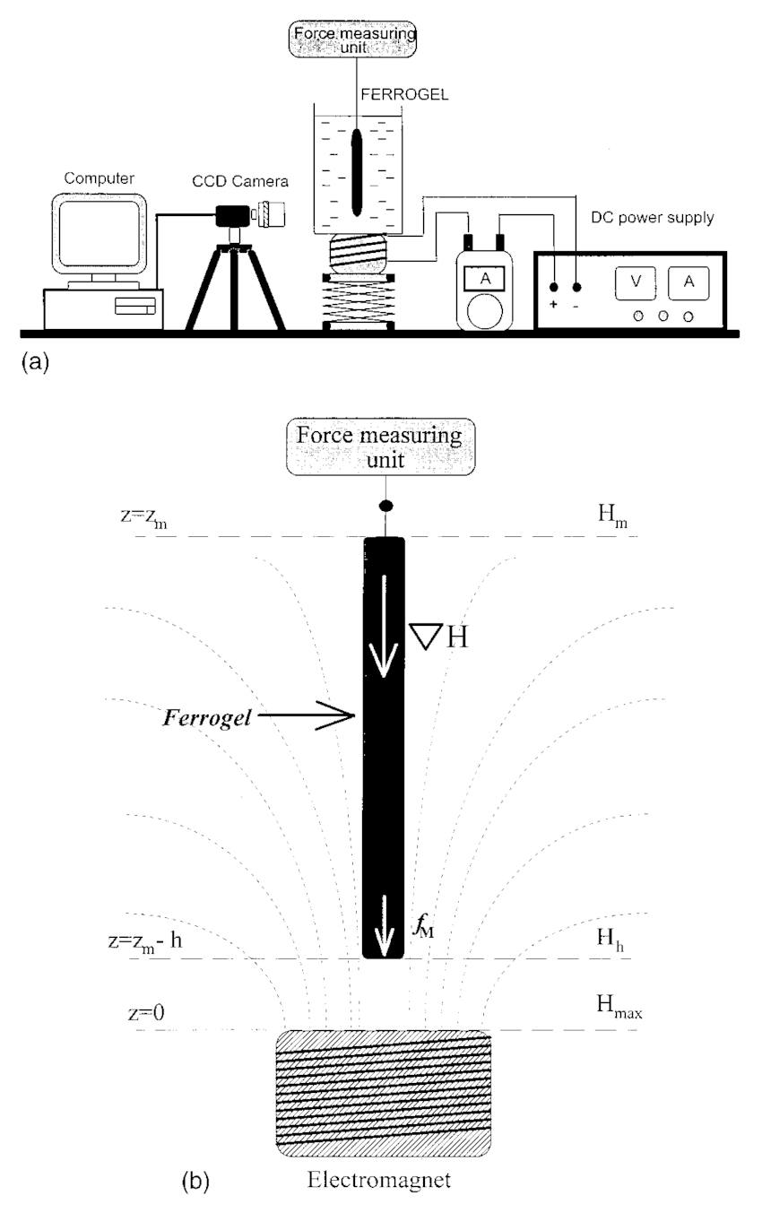 Schematic diagram of experimental setup to study the