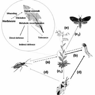 (PDF) Plant-insect interaction in the era of consolidation