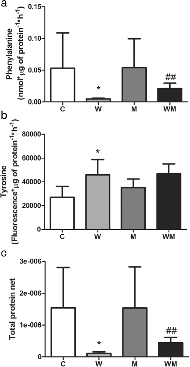 hight resolution of metformin increases protein turnover in gastrocnemius muscle of walker 256 tumour bearing rats a