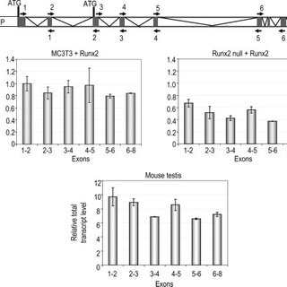 The full-length transcript of Cyp11a1 gene is induced by