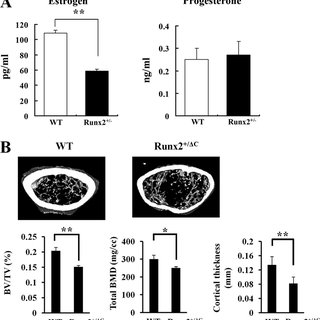 Aromatase gene expression and promoter activity in bone
