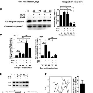 (PDF) IL-17A Promotes Intracellular Growth of