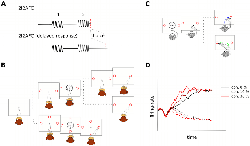 Prevalent experimental paradigms in perceptual decision