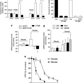 Effect of pharmacological or genetic suppression of PARP-1