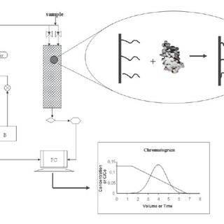 (PDF) Hydrophobic Interaction Chromatography: Fundamentals