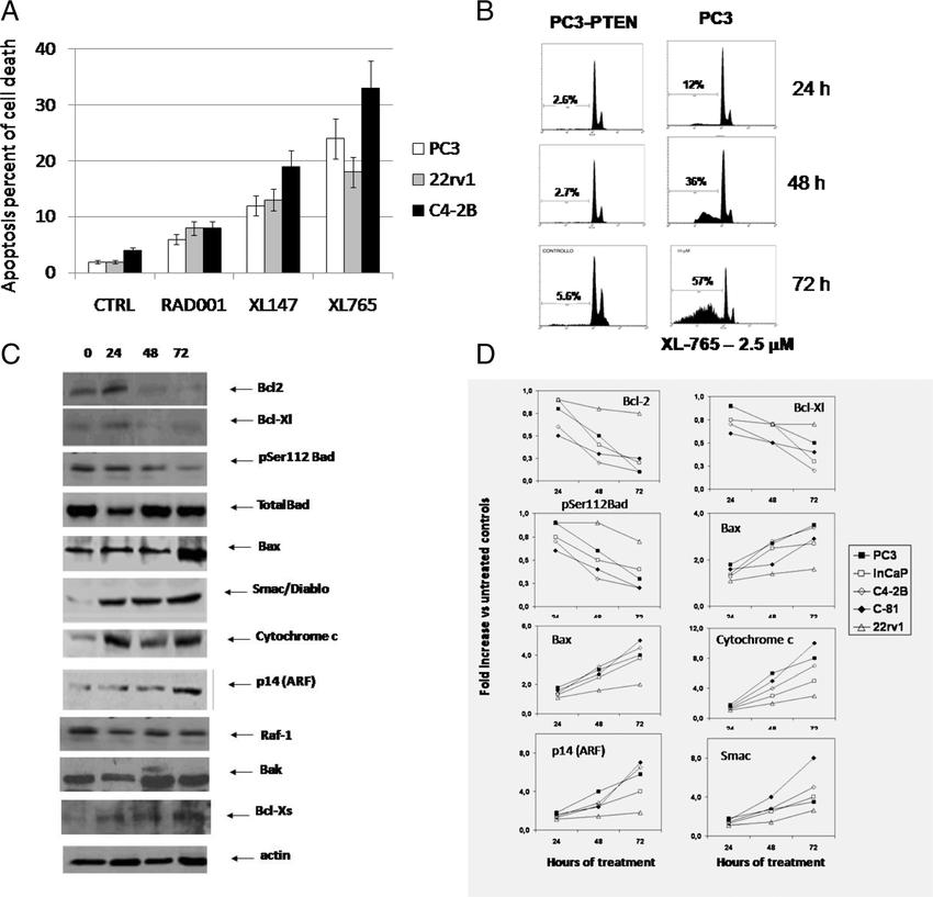 a Apoptosis induced by rapamycin, XL147, and XL765
