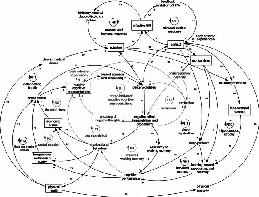 Causal loop diagram of cognitive, social, environmental