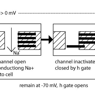 Block diagram of the used leaky integrate-and-fire synapse