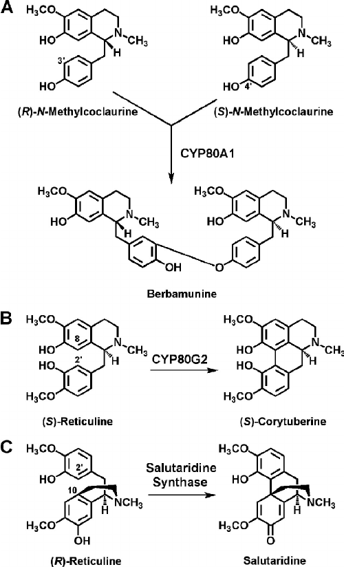 Selected phenol-coupling reactions of alkaloid