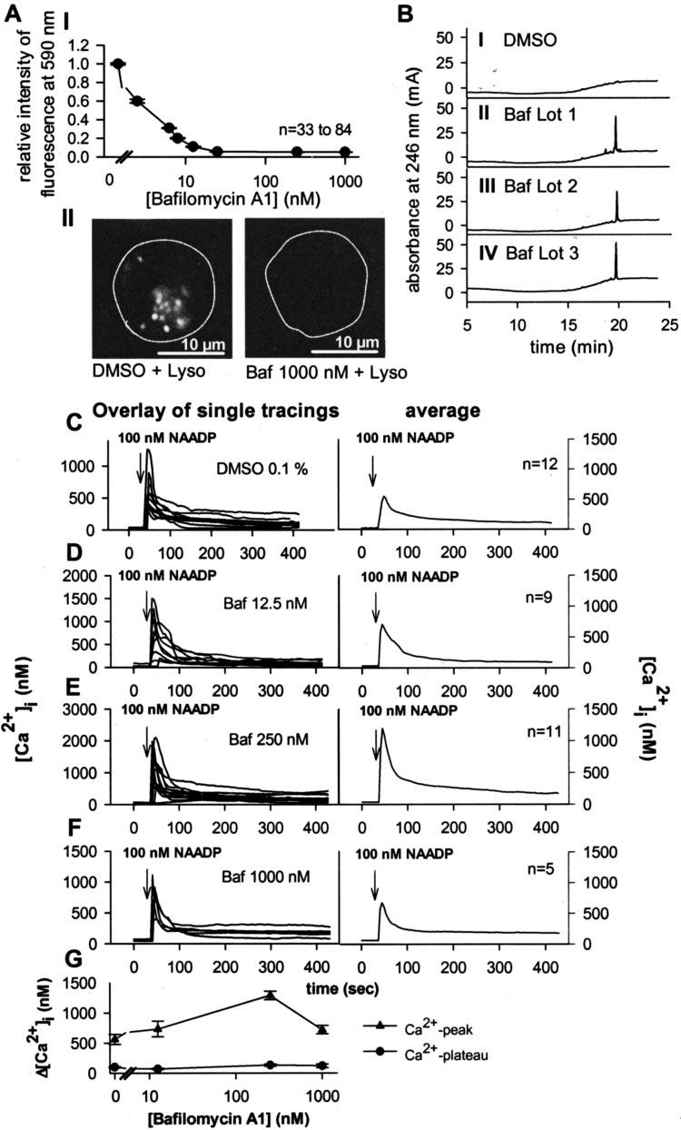 Effect of bafilomycin A1 (Baf) on LysoTracker staining