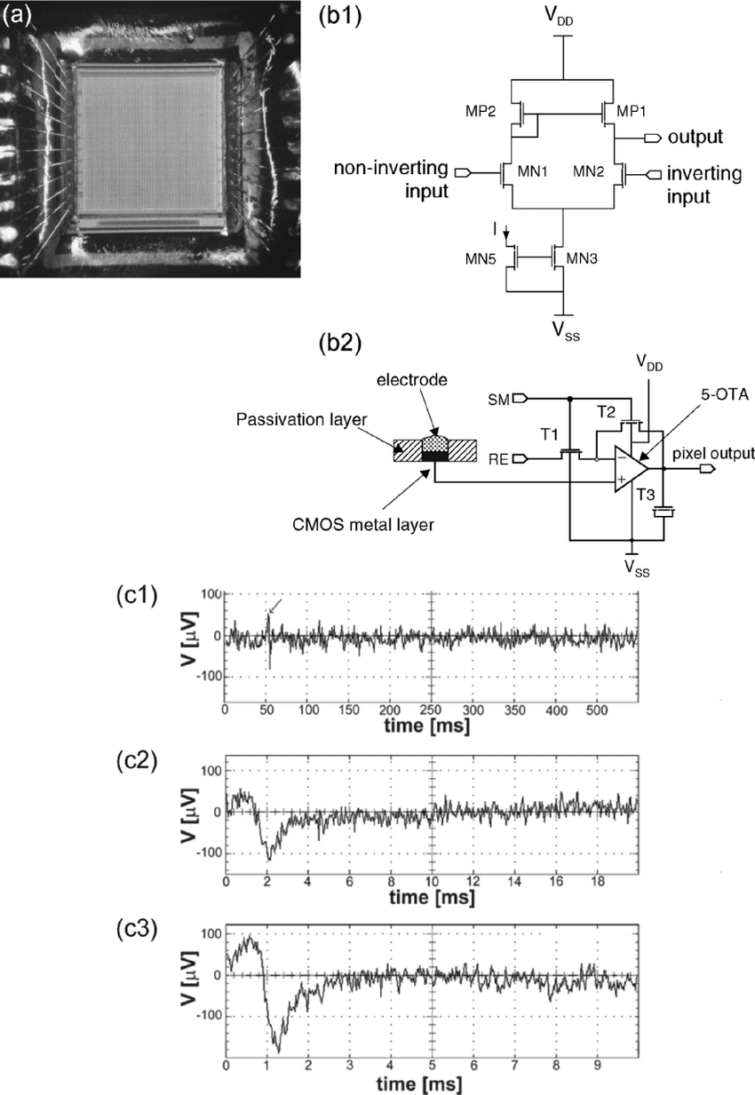 hight resolution of  b1 schematic of the amplifier c recordings of spontaneous electrical activity of rat cardiomyocytes cultured on the chip for 2 days from different