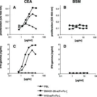 Binding of the extracellular BW431/26-scFv-Fc and H10-scFv