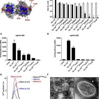(PDF) Receptor-Targeted Nipah Virus Glycoproteins Improve