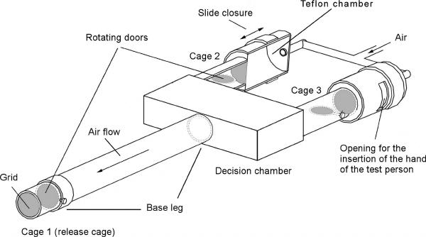 Y-tube olfactometer according to Geier et al. (1999). Cage