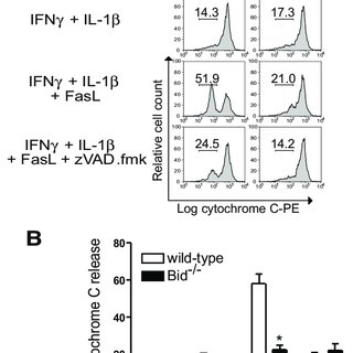 Bid is required for FasL-induced cytochrome c release from