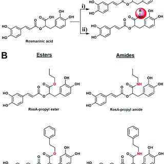 (PDF) Lipophilic ester and amide derivatives of rosmarinic