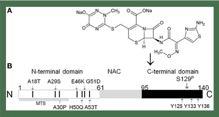   Binding of β-lactam antibiotic ceftriaxone to α-synuclein C-terminus....   Download Scientific Diagram