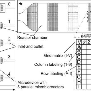Fabrication procedure of the microbioreactor device made
