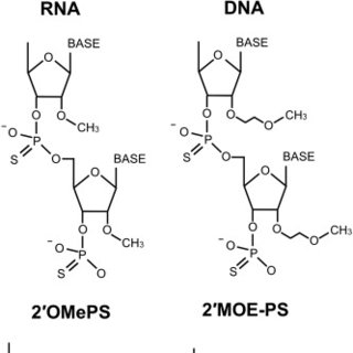 Structure of the DMD gene, including positions of