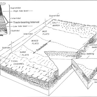 (PDF) Stratigraphy, paleontology and depositional