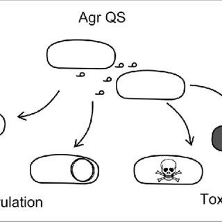 (PDF) Bacteriophage behavioral ecology