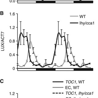 The role of GI in the regulation of TOC1 expression by the