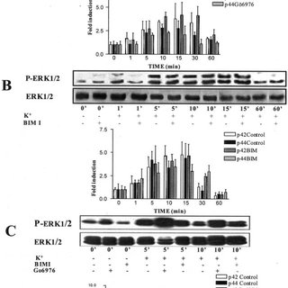 Depolarization-induced CREB phosphorylation is unaffected