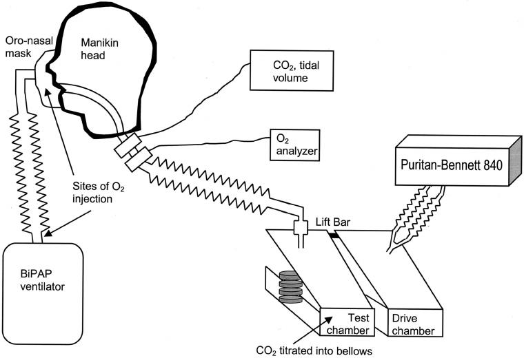 Experimental setup. BiPAP ϭ bi-level positive airway
