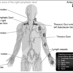 Diagram Nodes Lymphatic System Wolo Dixie Horn Wiring Of Showing Lymph Capillaries Vessels Exit Points