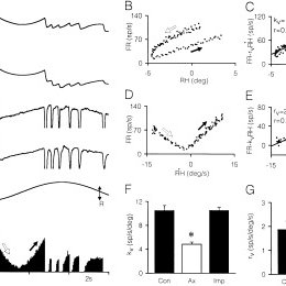 (PDF) Firing properties of axotomized central nervous