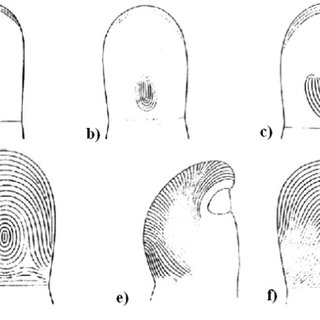 Results of the simulation of Fingerprint a) photo of the