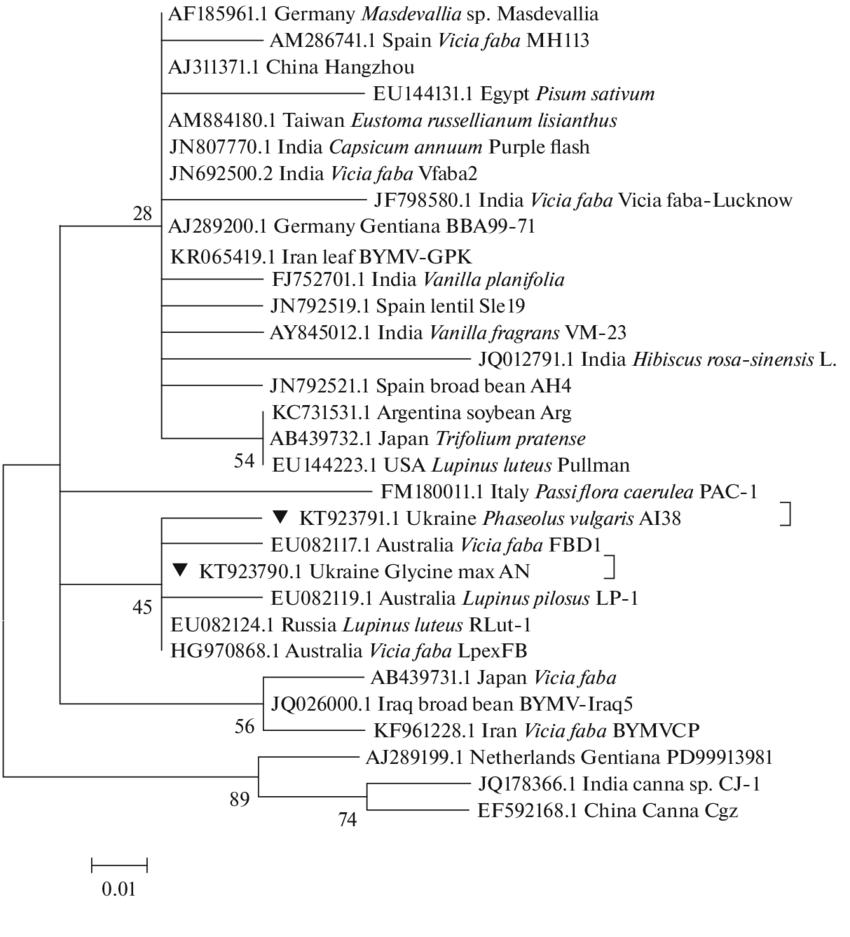 medium resolution of phylogenetic tree constructed using the maximum likelihood method jones taylor thornton jtt