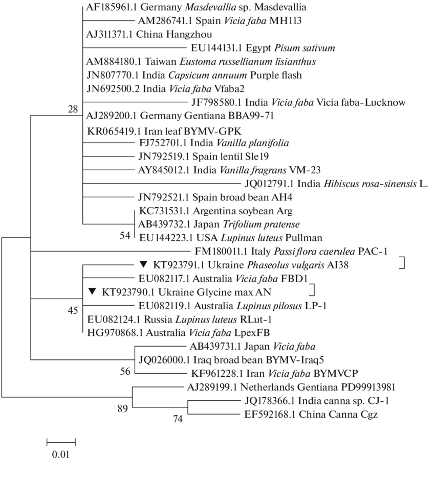 hight resolution of phylogenetic tree constructed using the maximum likelihood method jones taylor thornton jtt