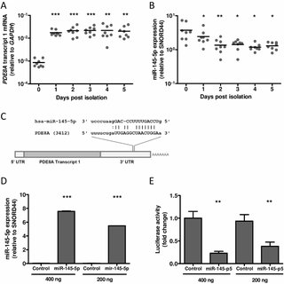 (PDF) Phosphodiesterase 8a Supports HIV-1 Replication in