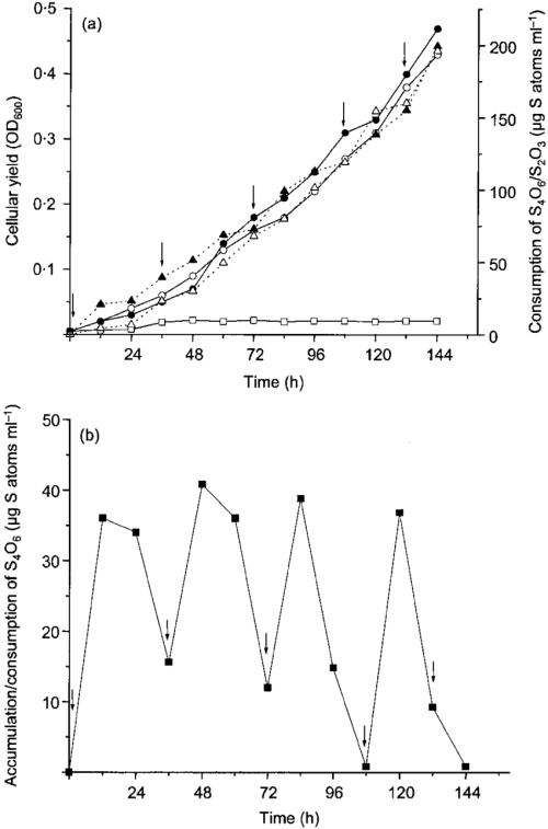 small resolution of chemolithotrophic growth coupled with the oxidation of thiosulfate or download scientific diagram