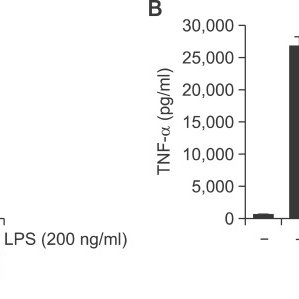 MH inhibited the release of IL-1β and TNF-α cytokines