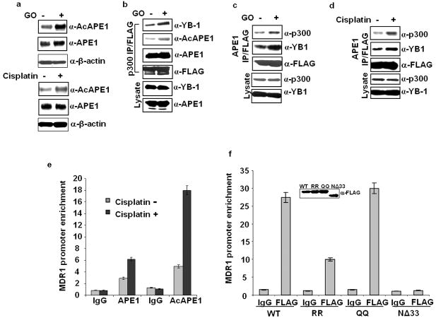 Oxidative stress enhances APE1's acetylation and its