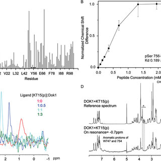 Interactions of Dok1 with unphosphorylated β2 tail KT15
