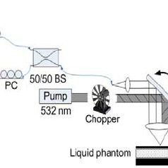 Dorsal skinfold window chamber model (a). White light