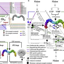 Ethernet Cable Wiring Diagram Soft Starter Panel P B All Data Of Pb Network Download Scientific Cat 5 Color Code