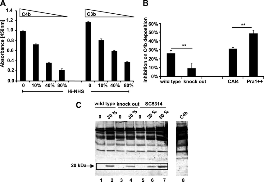 Function of C. albicans-recruited C4BP from normal human