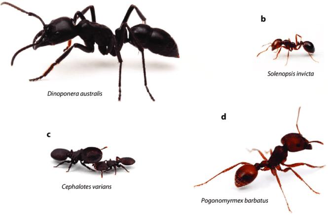 Bbc Ants Pests Argentine