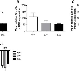 ENaC mRNA transcript expression and activity in colon from