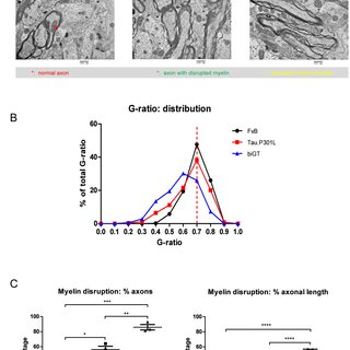A. Basal synaptic transmission measured as the initial