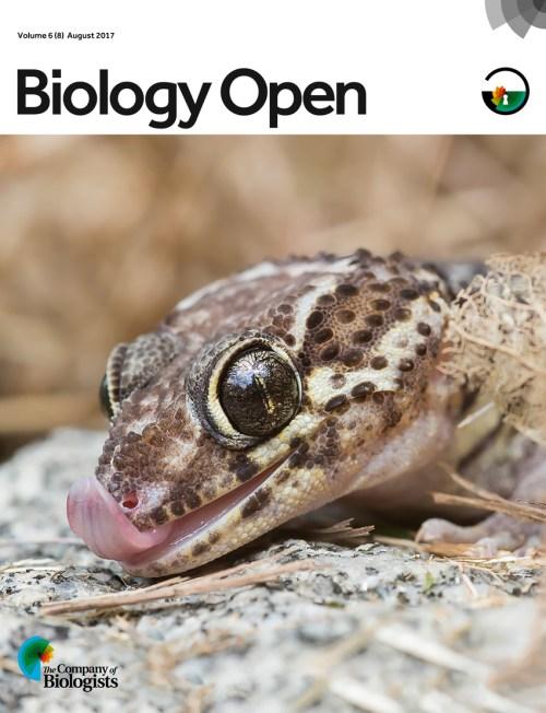 small resolution of the madagascar ground gecko paroedura picta has become a laboratory download scientific diagram