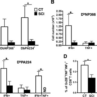 Impaired viral clearance in spinal cord injured mice. a