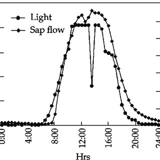 (PDF) Seasonal changes in xylem sap flow rate in mature