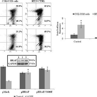 (PDF) Targeting TRAP1 as a downstream effector of BRAF